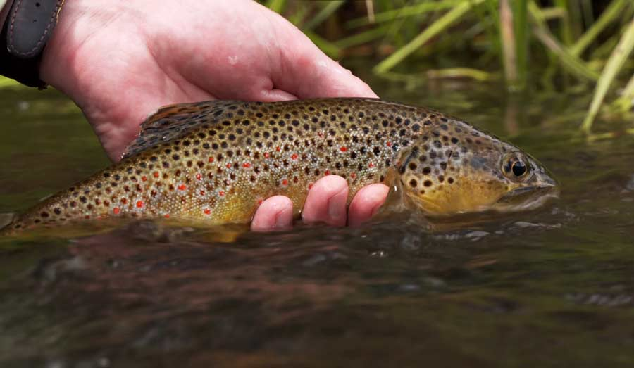 Video: Small Stream Colorado, by Todd Moen
