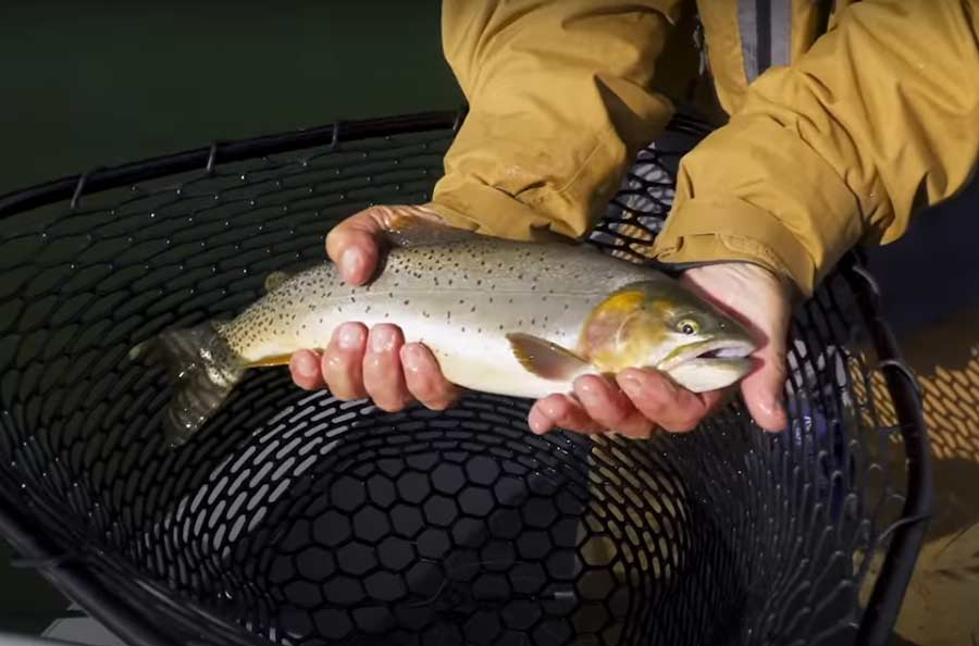 Video: Advanced Stillwater Fly Fishing, with Tom Rosenbauer