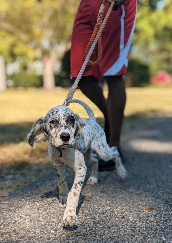 5 Tips for Becoming a Better Dog Walker