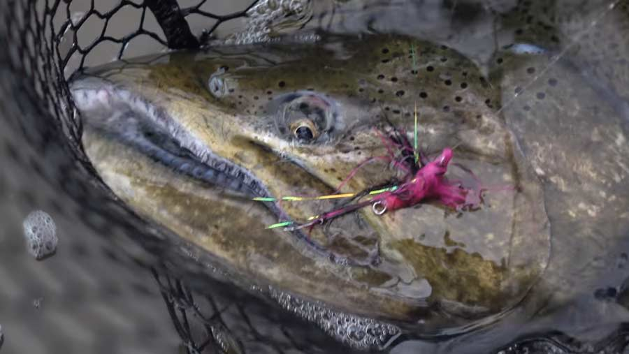 Video: How to Tie the Douglas Salmon Camp Swinger