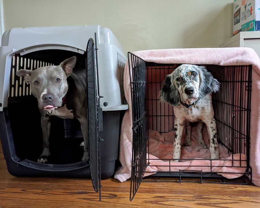How a Dog Crate Helps with Potty Training and More