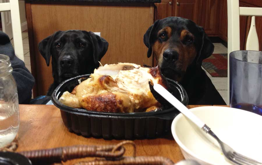 Video: Top 10 Thanksgiving Foods That Are Dangerous for Dogs