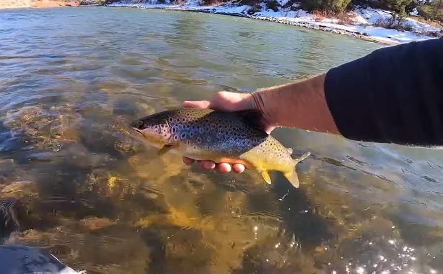 Video: A Solo Float for Trout