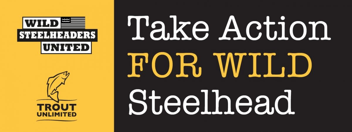 Action Alert: Help Protect Olympic Peninsula Steelhead RIGHT NOW!