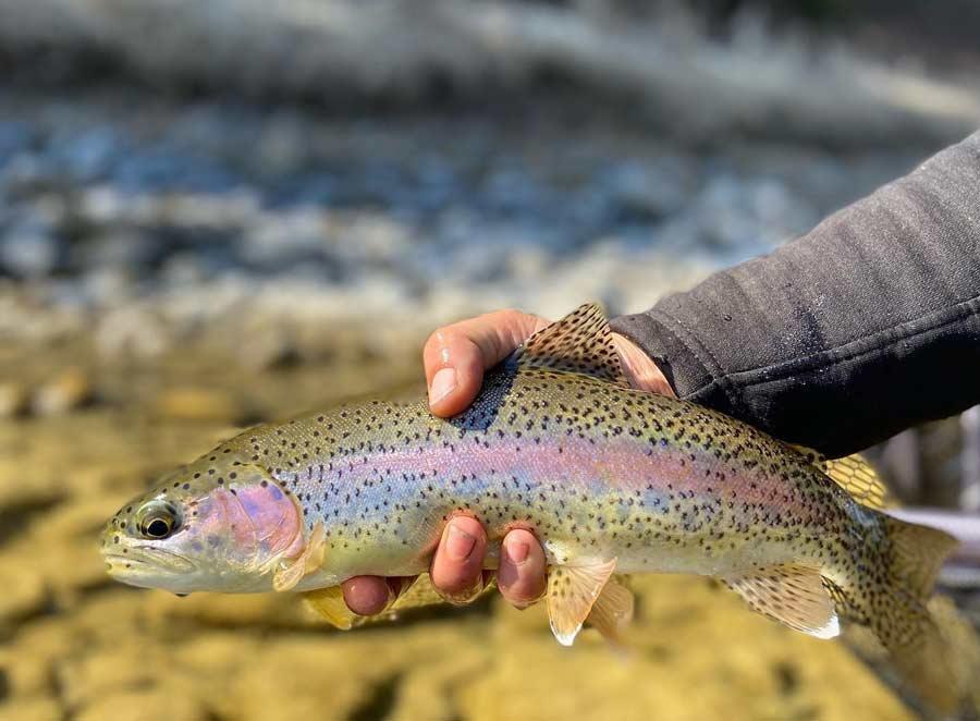Top 5 Flies for Montana Spring