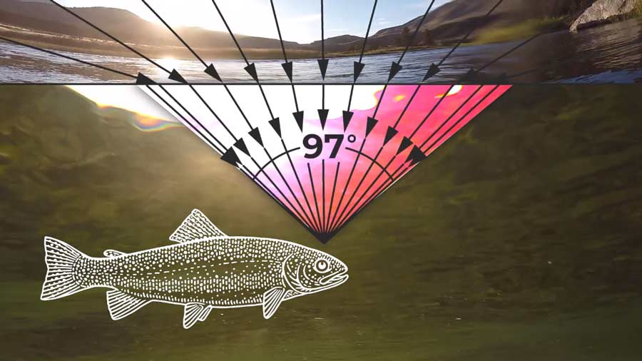 Video Pro Tips: How Do Trout See, Hear, and Smell?
