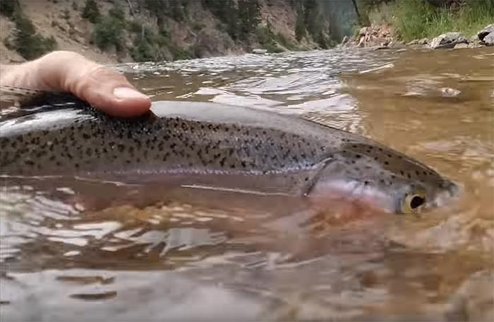 """Video: A Guide Reveals His """"Dirty Trick"""" for Catching Trout"""